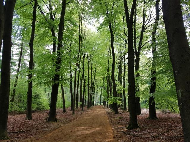 In het bos met Lank